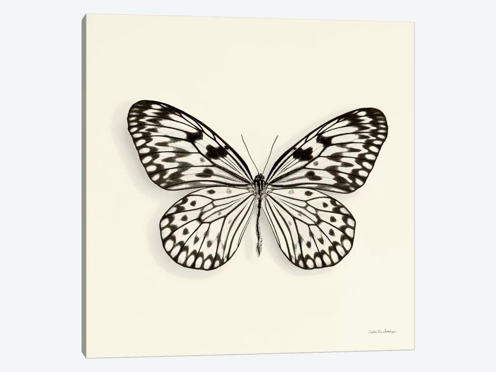 Butterfly V In B&W by Debra Van Swearingen 1-piece Canvas Print