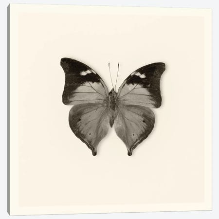 Butterfly VII In B&W Canvas Print #WAC5461} by Debra Van Swearingen Canvas Artwork