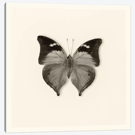 Butterfly VII In B&W Canvas Print #WAC5461} by Debra Van Swearingen Canvas Artwork