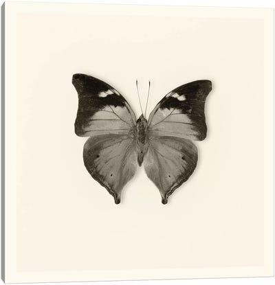 Butterfly VII In B&W Canvas Art Print
