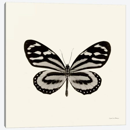 Butterfly VIII In B&W Canvas Print #WAC5462} by Debra Van Swearingen Canvas Artwork