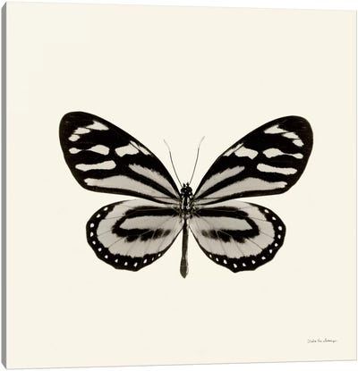 Butterfly VIII In B&W Canvas Art Print