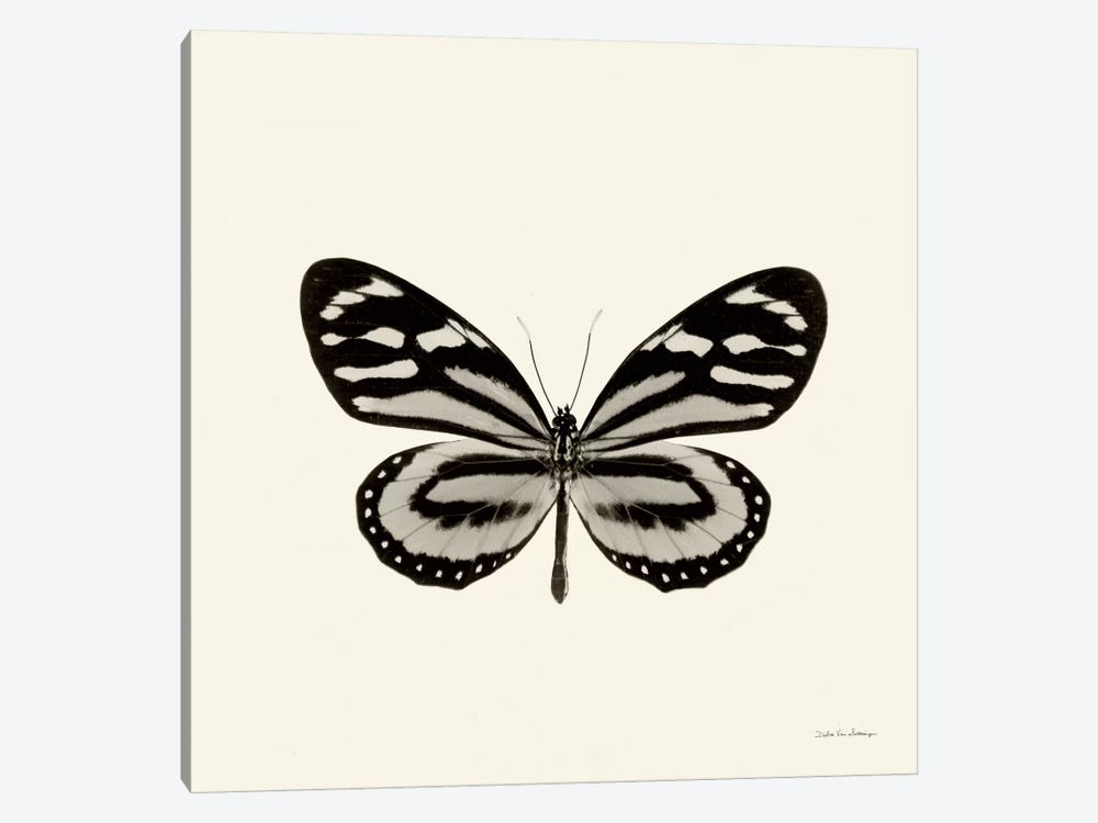 Butterfly VIII In B&W by Debra Van Swearingen 1-piece Canvas Print