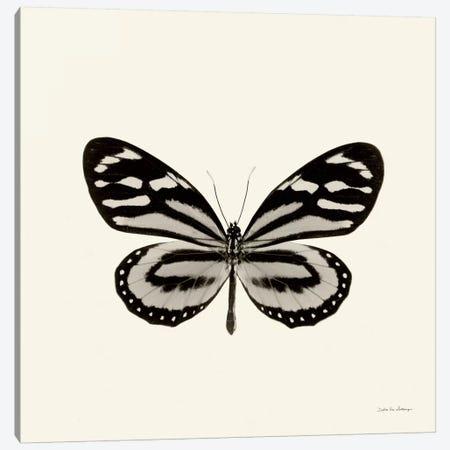 Butterfly VIII In B&W Canvas Print #WAC5462} by Debra Van Swearingen Canvas Artwork