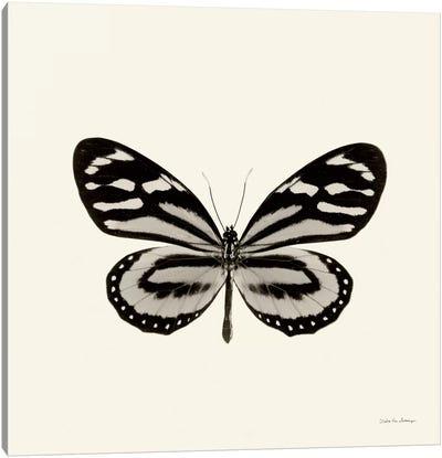 Butterfly VIII In B&W Canvas Art Print