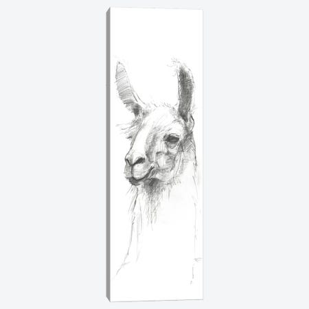 Bianca Sketch Canvas Print #WAC5509} by Avery Tillmon Art Print