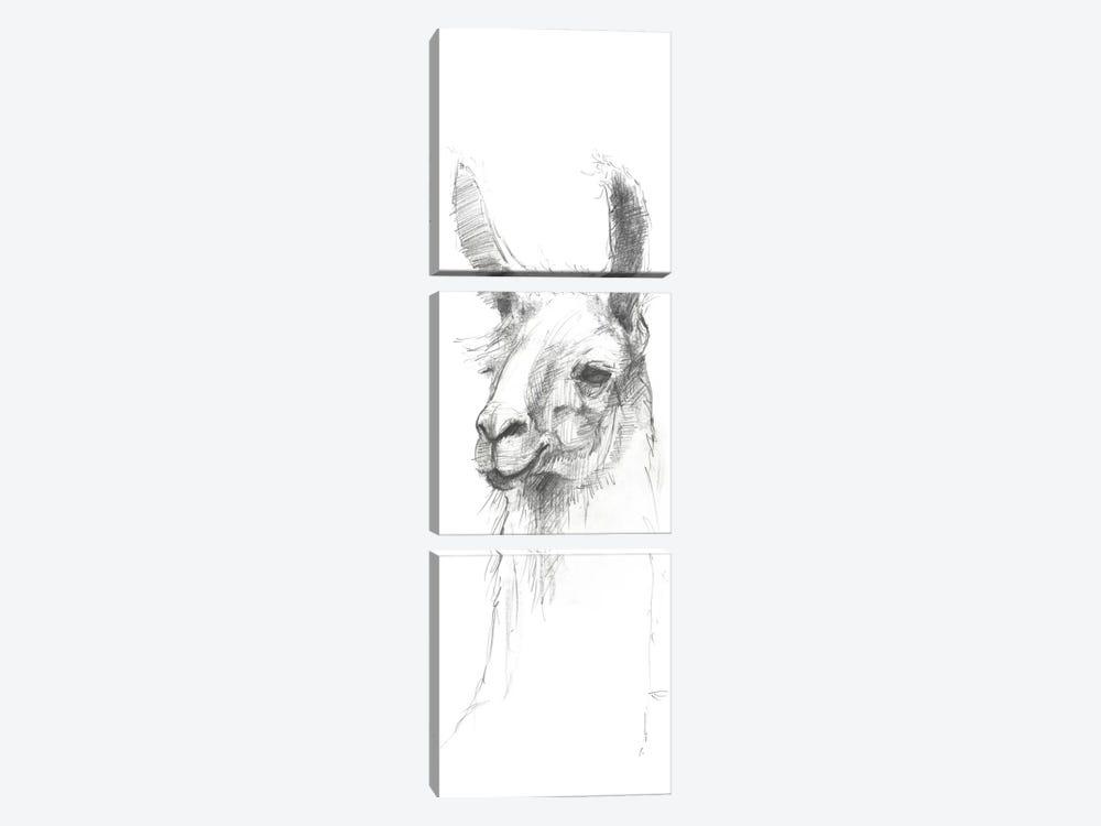 Bianca Sketch by Avery Tillmon 3-piece Canvas Art Print