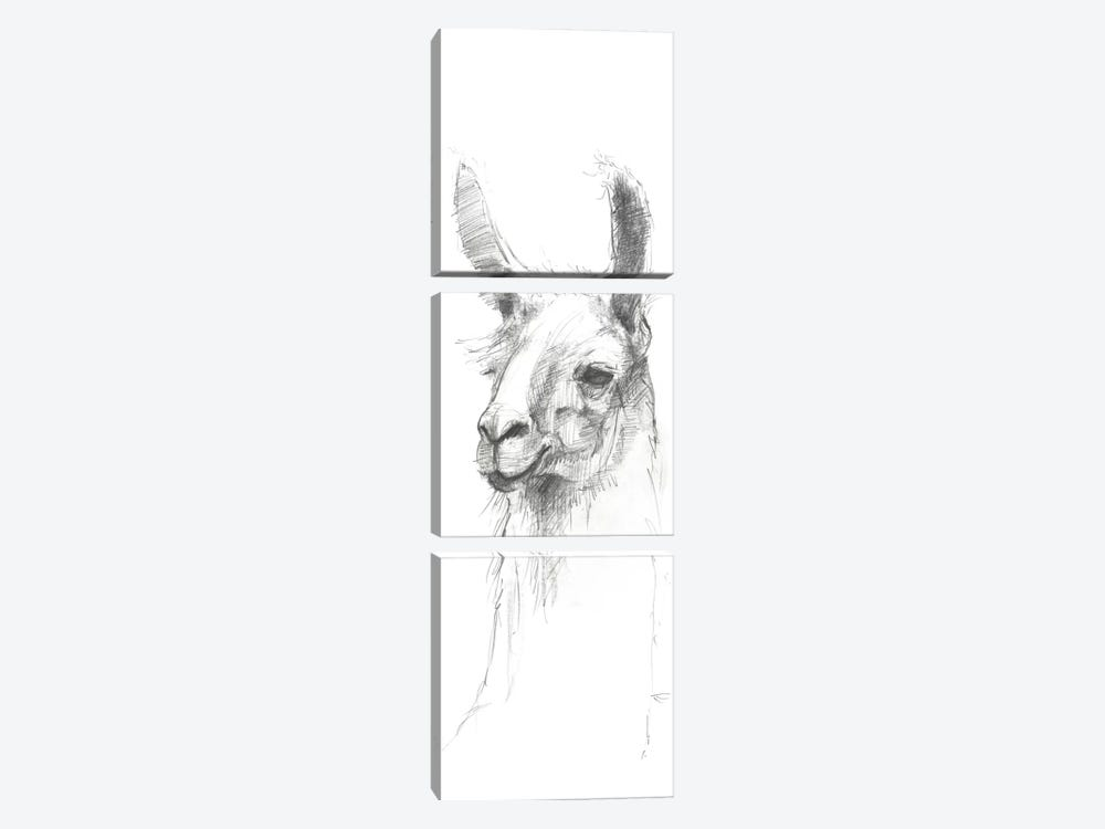 Bianca Sketch by Avery Tillmon 3-piece Canvas Art Print