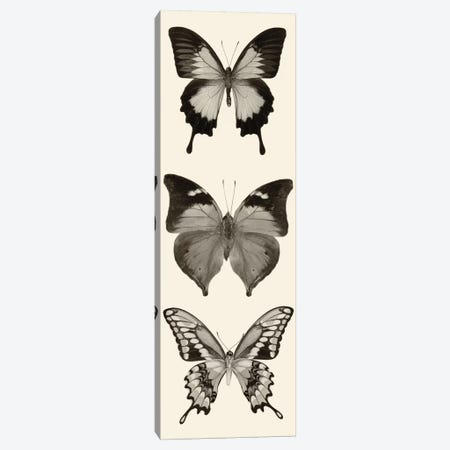 Butterfly Panel I In B&W Canvas Print #WAC5602} by Debra Van Swearingen Canvas Wall Art