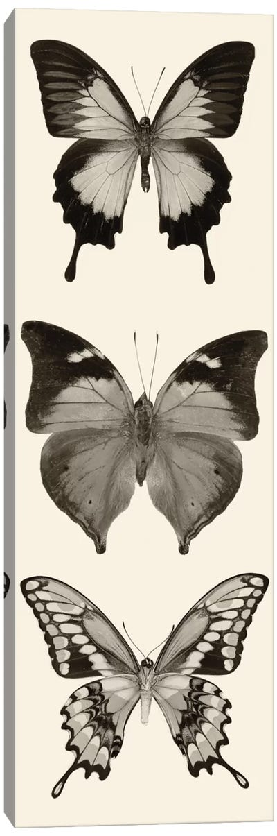 Butterfly Panel I In B&W Canvas Art Print