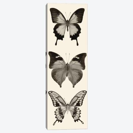 Butterfly Panel I In B&W Canvas Print #WAC5602} by Debra Van Swearingen Canvas Wall Art