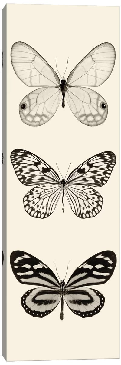Butterfly Panel II In B&W Canvas Art Print