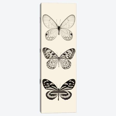 Butterfly Panel II In B&W Canvas Print #WAC5603} by Debra Van Swearingen Canvas Wall Art