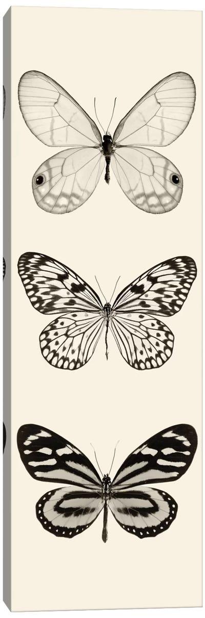 Butterfly Panel II In B&W Canvas Art Print
