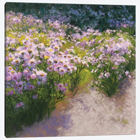 Buckhorn Aster Show Canvas Print #WAC5623} by Shirley Novak Canvas Art