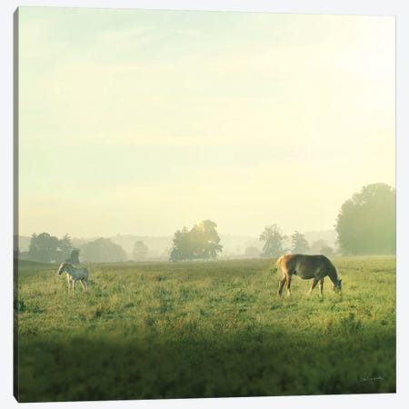 Farm Morning I Canvas Print #WAC5798} by Sue Schlabach Canvas Art