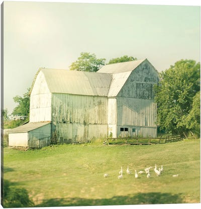 Farm Morning III Canvas Art Print