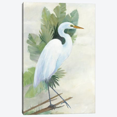 Standing Egret I Canvas Print #WAC5816} by Avery Tillmon Canvas Wall Art