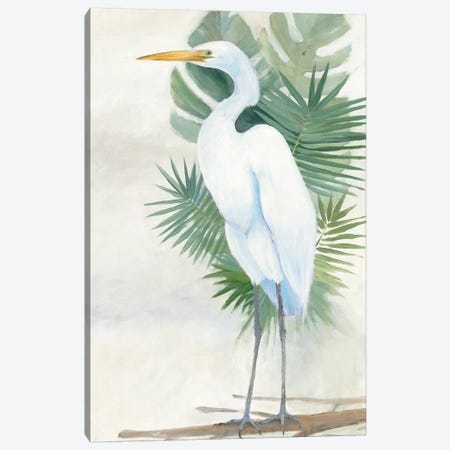 Standing Egret II Canvas Print #WAC5817} by Avery Tillmon Canvas Art