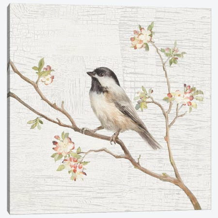 Vintage Black Capped Chickadee Canvas Print #WAC5888} by Danhui Nai Canvas Art