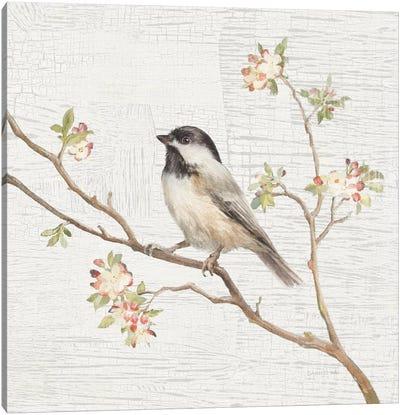 Vintage Black Capped Chickadee Canvas Print #WAC5888