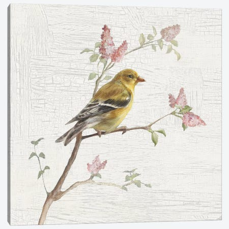 Vintage Female Goldfinch Canvas Print #WAC5889} by Danhui Nai Canvas Art