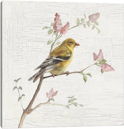 Vintage Female Goldfinch Canvas Print #WAC5889