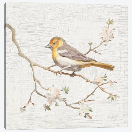 Vintage Northern Oriole Canvas Print #WAC5890} by Danhui Nai Art Print