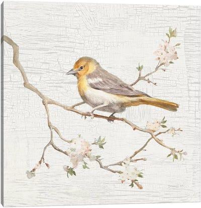 Vintage Northern Oriole Canvas Art Print