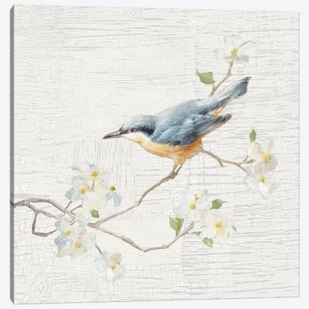 Vintage Nuthatch Canvas Print #WAC5891} by Danhui Nai Canvas Print