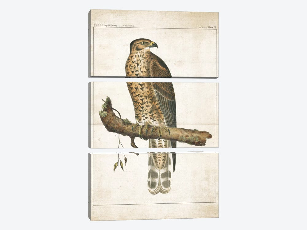 The Lookout I by Wild Apple Portfolio 3-piece Canvas Art