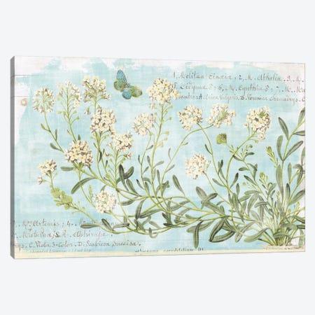Botany Blue I Canvas Print #WAC5922} by Sue Schlabach Canvas Art Print