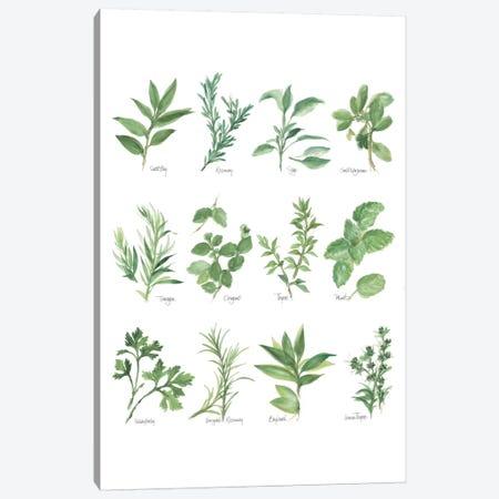 Herb Chart I Canvas Print #WAC5962} by Chris Paschke Canvas Art Print