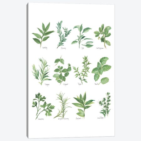 Herb Chart I Canvas Print #WAC5962} by Chris Paschke Canvas Art Print