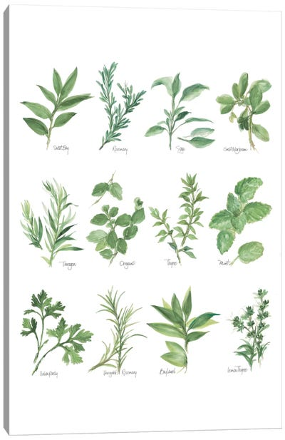 Herb Chart I Canvas Art Print