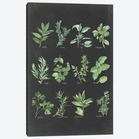 Herb Chart II Canvas Print #WAC5963} by Chris Paschke Canvas Art Print