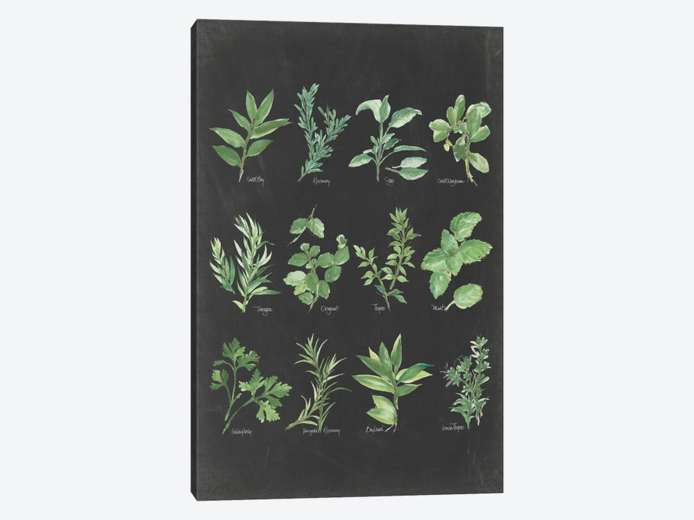 Herb Chart II by Chris Paschke 1-piece Canvas Print