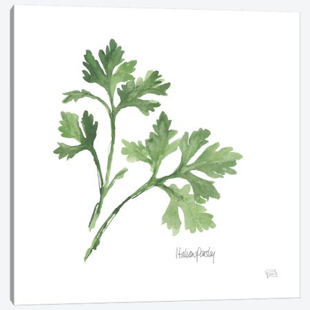 Italian Parsley Canvas Print #WAC5964} by Chris Paschke Canvas Art