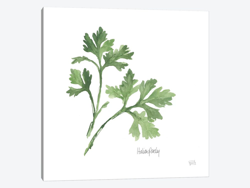 Italian Parsley by Chris Paschke 1-piece Canvas Art