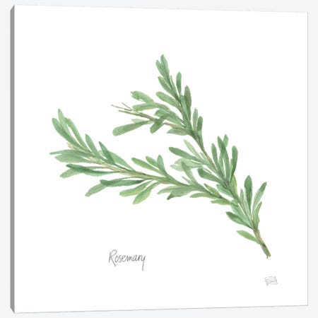Rosemary Canvas Print #WAC5965} by Chris Paschke Canvas Wall Art