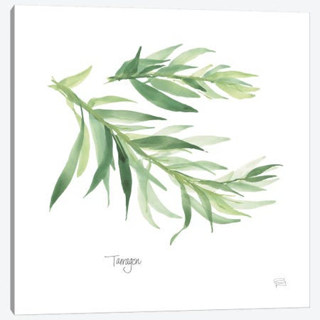Tarragon Canvas Print #WAC5967} by Chris Paschke Canvas Wall Art