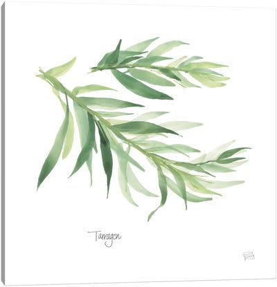 Tarragon Canvas Art Print