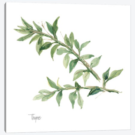 Thyme Canvas Print #WAC5968} by Chris Paschke Art Print