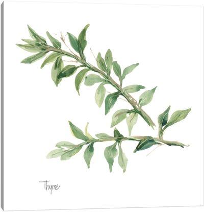 Thyme Canvas Art Print