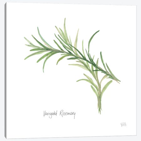 Variegated Rosemary Canvas Print #WAC5969} by Chris Paschke Art Print