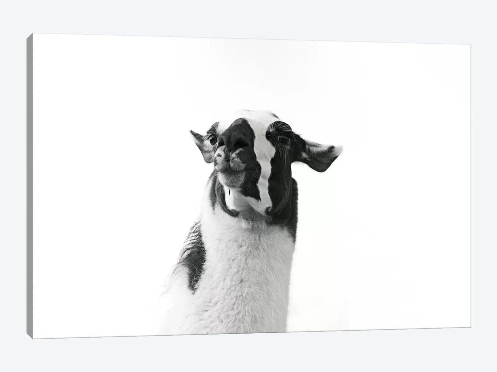 Lovable Llama I 1-piece Canvas Art Print