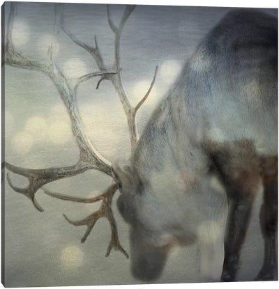 If On A Winter's Night Canvas Art Print