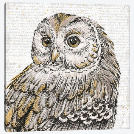 Beautiful Owls I Canvas Print #WAC6038} by Daphne Brissonnet Canvas Art Print