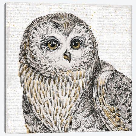 Beautiful Owls II Canvas Print #WAC6039} by Daphne Brissonnet Canvas Art Print