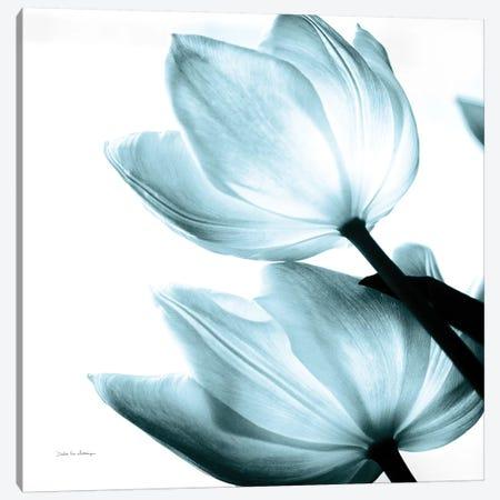 Translucent Tulips II In Aqua Canvas Print #WAC6050} by Debra Van Swearingen Canvas Print